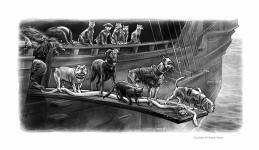 pawtriot dogs 3- 16